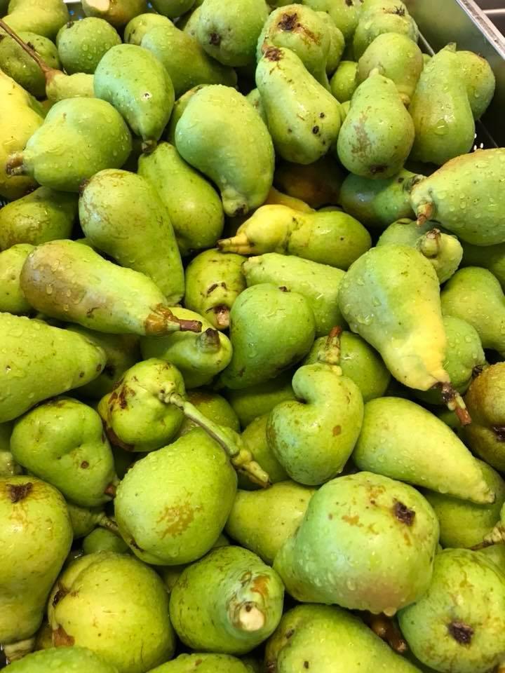 Kilokaupalla päärynöitä mehuksi.